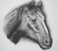 sams-horse